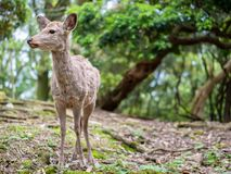 Sweet Little Deer Kid Fawn Looking to the Side with Sunshine in the forest with green background stock photos