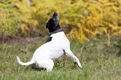 Sweet little dog on meadow Stock Photo