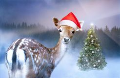 Little sweet fawn in red Santa Claus hat is looking into the camera at Christmas time stock photos
