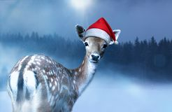 Little sweet fawn in red Santa Claus hat is looking into the camera royalty free stock images