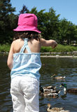 Sweet little girl feeding ducks in a pond Stock Images