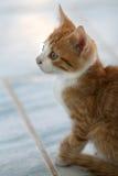 Sweet little kitten Stock Photography