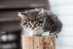 Sweet little kitten  sits on the backyard Royalty Free Stock Images