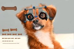Sweet little moggy pup at the optician checking his eyesight. Portrait of young mongrel dog with trial frame at an optician shop. He checks his eyesight royalty free stock image