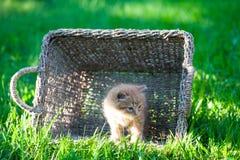 Sweet little orange kitten. In the backyard Stock Photo