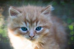 Sweet little orange kitten. In the backyard Royalty Free Stock Photography