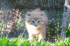 Sweet little orange kitten. In the backyard Royalty Free Stock Photos