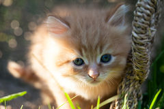 Sweet little orange kitten. In the backyard Royalty Free Stock Photo