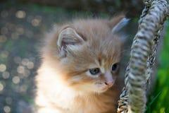 Sweet little orange kitten. Sweet little orange  kitten in the backyard Royalty Free Stock Photography