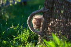 Sweet little orange kitten. In the backyard Royalty Free Stock Images