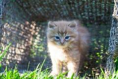 Sweet little orange kitten in the basket. On the backyard Royalty Free Stock Image