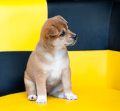 Pretty puppy Stock Images