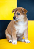 Pretty puppy Royalty Free Stock Photo
