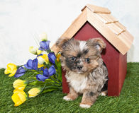 Cute Puppy Peekimg Out of a Dog House. Royalty Free Stock Photo