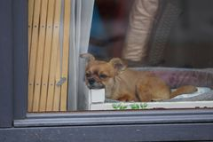 Sweet little tired dog. Sweet and little tired dog Royalty Free Stock Images