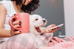 Sweet little white dog yawning on knees young woman in pajama chilling on bed with a cup of tee. Enjoying home comfort stock photos