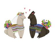 Sweet llamas couple in love. Cute cartoon characters. Happy Valentine`s day. Design concept for wedding invitation, greeting card, royalty free illustration