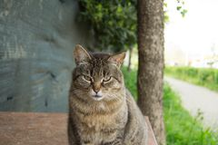 Sweet lonely cat of feline colony. Transmits sadness and loneliness despite the beauty of its spieces stock photos