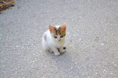 Sweet lonely kitten Royalty Free Stock Image