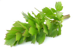 Sweet lovage Royalty Free Stock Photo