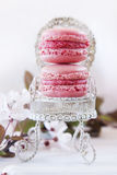 Sweet Macarons royalty free stock image