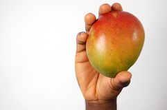 Sweet Mango!. This is an image of a hand holding a mango. (Please let me know where the image will be used by leaving a message in the Comments Section/See royalty free stock images