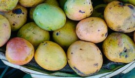Sweet mango fruits at the rural market. In Port Louis, Mauritius Royalty Free Stock Photo