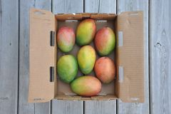 Sweet mangoes Stock Image