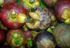Sweet mangosteen fruit  Garcinia mangostana Royalty Free Stock Photos