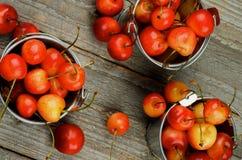 Sweet Maraschino Cherries Stock Photo