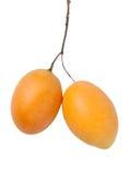 Sweet Marian Plum fruit, Mayongchid,Maprang, Marian Plum Stock Image