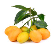 Sweet marian plum thai fruit isolated on white backgroun Stock Photography
