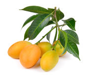 Sweet marian plum thai fruit on white backgroun Royalty Free Stock Images
