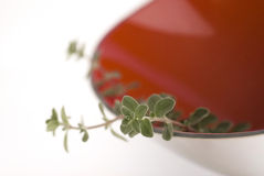 Sweet marjoram in red bowl 2. Sweet marjoram in red bowl stock image