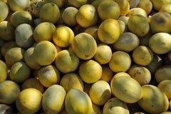 Sweet melon Stock Image
