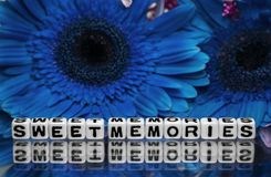 Sweet memories with blue flowers Royalty Free Stock Photography
