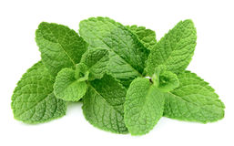 Sweet mint closeup Royalty Free Stock Image
