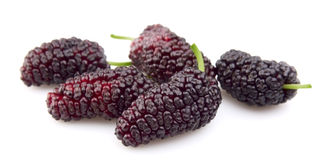 Sweet mulberry Royalty Free Stock Photos