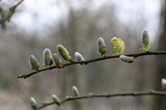 Sweet nature stock photos