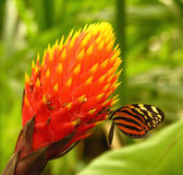 Sweet Nectar. A butterfly sitting on a flower Royalty Free Stock Photos