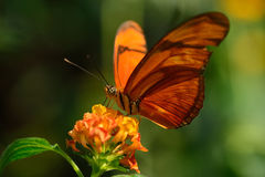 Sweet nectar Royalty Free Stock Images