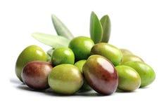 Sweet olives fruits. Stock Image
