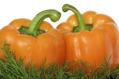 Sweet orange pepper Stock Photos