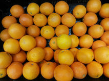 Sweet Orange Stock Images
