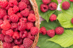 Sweet Organic Raspberries in a Basket Royalty Free Stock Photography