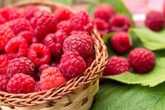 Sweet Organic Raspberries in a Basket. Sweet Organic Raspberries in a Wicker Basket Stock Photography