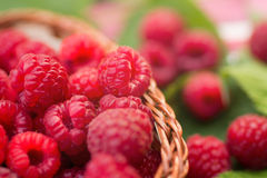 Sweet Organic Raspberries in a Basket. Sweet Organic Raspberries in a Wicker Basket Royalty Free Stock Photography