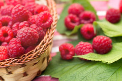 Sweet Organic Raspberries in a Basket. Sweet Organic Raspberries in a Wicker Basket Stock Photo