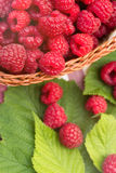 Sweet Organic Raspberries in a Basket. Sweet Organic Raspberries in a Wicker Basket Stock Photos