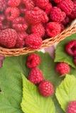 Sweet Organic Raspberries in a Basket Stock Photos